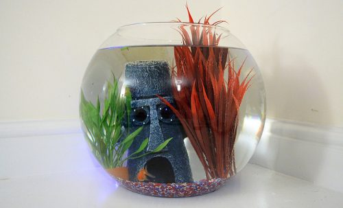 Un aquarium symbolisant le vase clôt dans lequel il est parfois préférable de placer son site web.